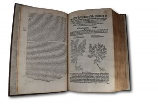 A Niewe Herball, or Historie of Plantes:; Wherin is contayned the whole discourse and perfect description of all sortes of Herbes and Plantes: their divers & sundry kindes: their straunge Figures, Fashions, and Shapes: their names/ natures/ Operations/ and Vertues: and that not onely of those whiche are here growyng in this Countrie of Englande/ but of all others also of forayne Realmes/ commonly used in Physicke. First set foorth in the Doutche or Almaigne tongue, by that learned D. Rembert Dodoens, Physition to the Emperour: And nowe first translated out of French into English, by Henry Lyte Esquyer.